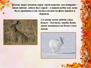 Многие звери меняют окрас своей шерсти: посмотрите – этот зайчик летом был се