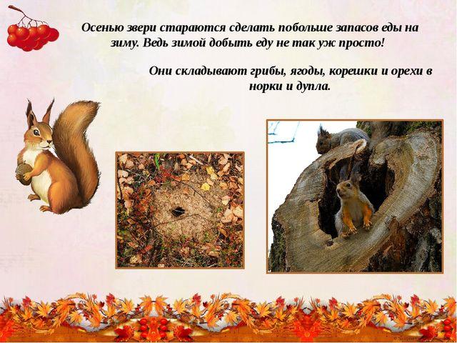 Осенью звери стараются сделать побольше запасов еды на зиму. Ведь зимой добыт...