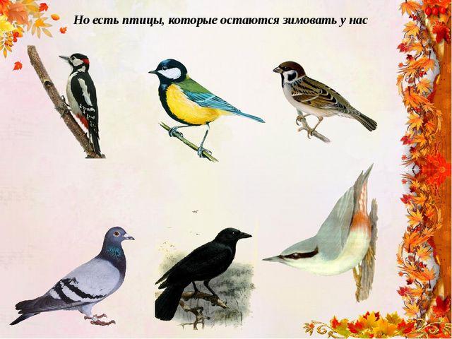 Но есть птицы, которые остаются зимовать у нас