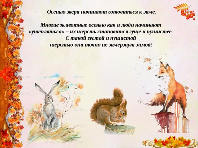 Осенью звери начинают готовиться к зиме. Многие животные осенью как и люди на...