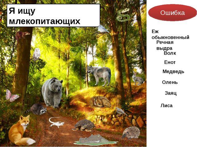 Я ищу млекопитающих Ошибка Еж обыкновенный Речная выдра Волк Енот Медведь Оле...