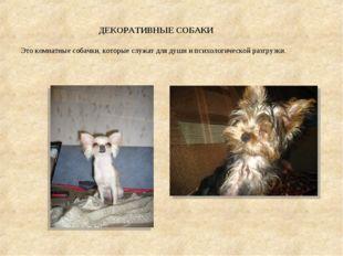 ДЕКОРАТИВНЫЕ СОБАКИ Это комнатные собачки, которые служат для души и психоло