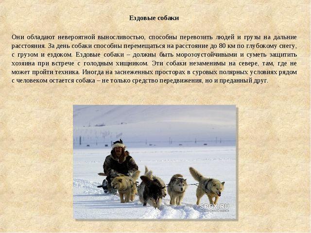 Ездовые собаки Они обладают невероятной выносливостью, способны перевозить л...