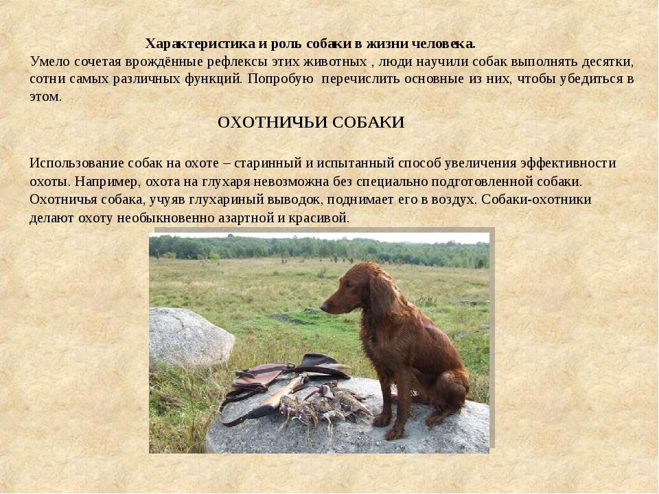 Характеристика и роль собаки в жизни человека. Умело сочетая врождённые рефл...
