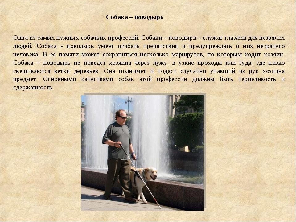 Собака – поводырь Одна из самых нужных собачьих профессий. Собаки – поводыри...