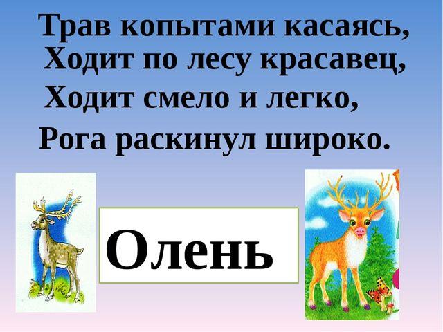 Трав копытами касаясь, Ходит по лесу красавец, Ходит смело и легко, Рога рас...
