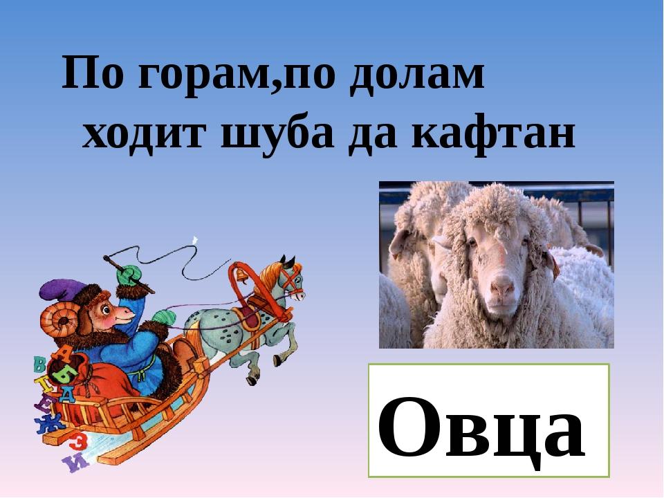 По горам,по долам ходит шуба да кафтан Овца