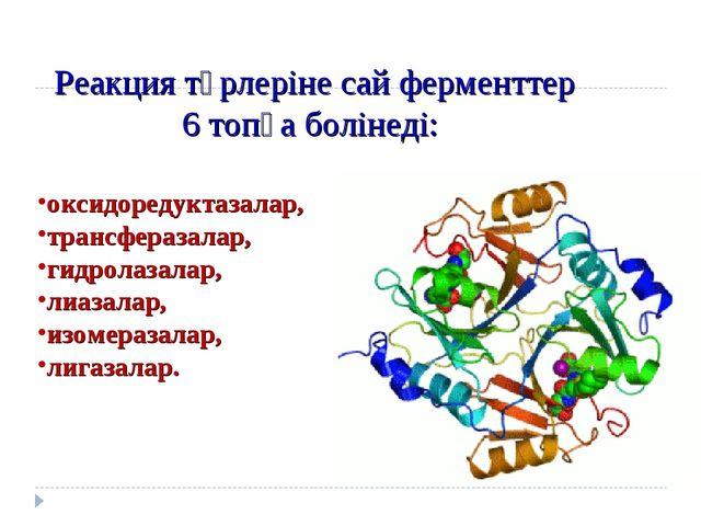 Реакция түрлеріне сай ферменттер 6 топқа болінеді: оксидоредуктазалар, транс...