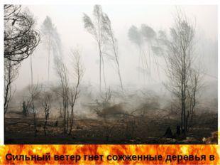 Сильный ветер гнет сожженные деревья в селе Белоомут (автор фотографии – Андр