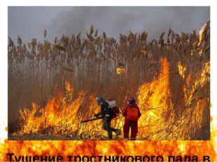 Тушение тростникового пала в окрестностях Астраханского заповедника в марте 2