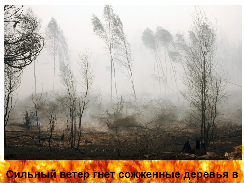 Сильный ветер гнет сожженные деревья в селе Белоомут (автор фотографии – Андр...