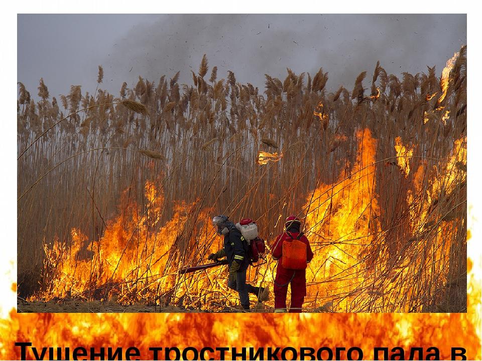 Тушение тростникового пала в окрестностях Астраханского заповедника в марте 2...