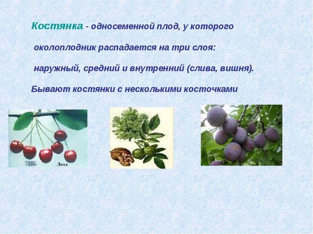 Костянка - односеменной плод, у которого околоплодник распадается на три слоя...