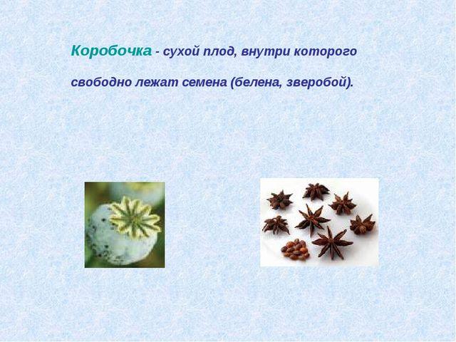 Коробочка - сухой плод, внутри которого свободно лежат семена (белена, звероб...