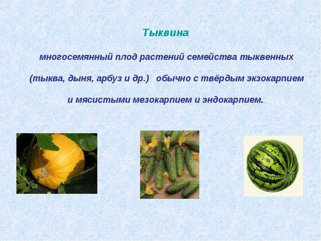 Тыквина многосемянный плод растений семейства тыквенных (тыква, дыня, арбуз и...