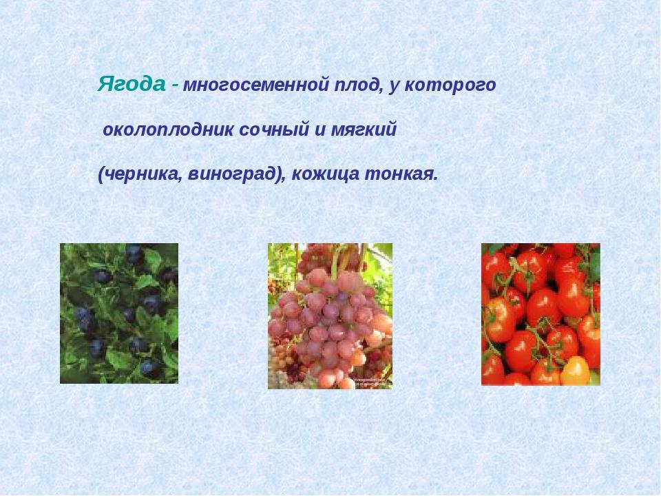 Ягода - многосеменной плод, у которого околоплодник сочный и мягкий (черника,...
