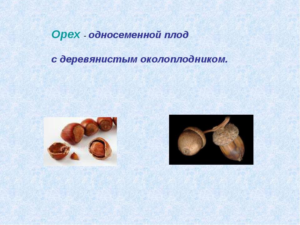 Орех - односеменной плод с деревянистым околоплодником.