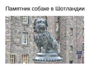 Памятник собаке в Шотландии