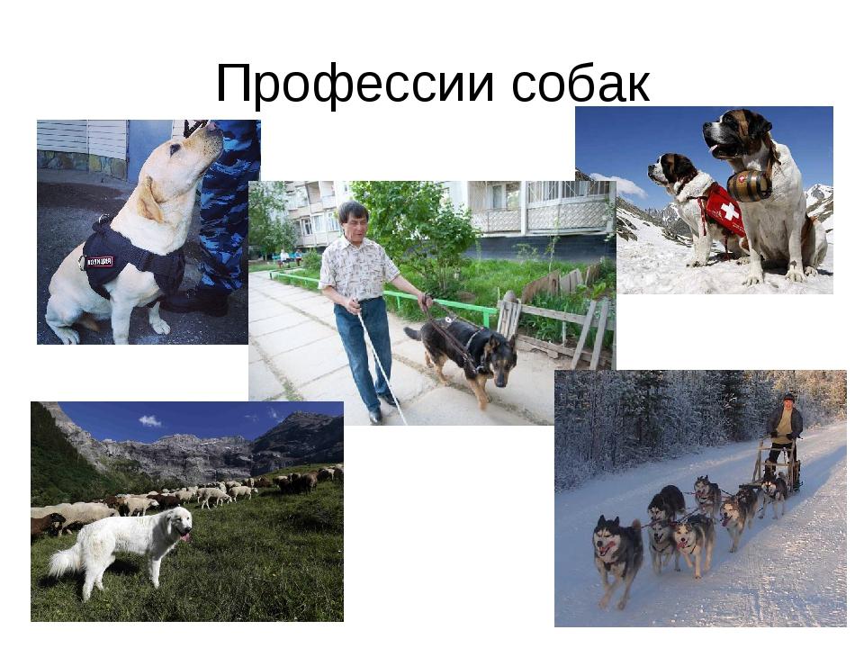 Профессии собак