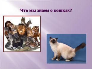 Что мы знаем о кошках?