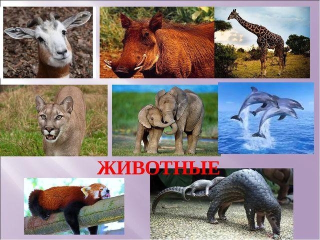 Животные ЖИВОТНЫЕ