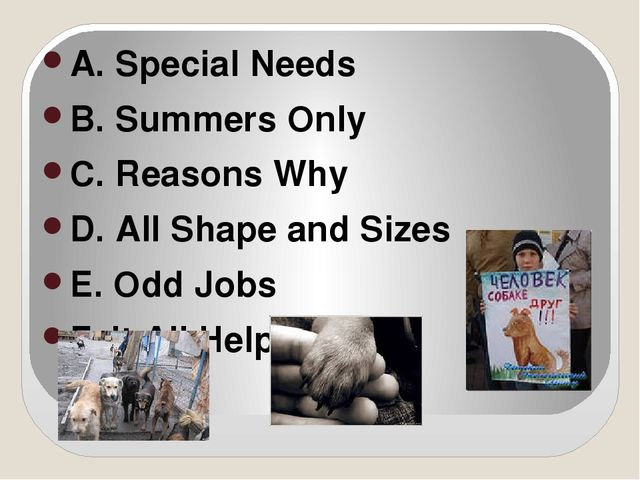 A. Special Needs B. Summers Only C. Reasons Why D. All Shape and Sizes E. Od...
