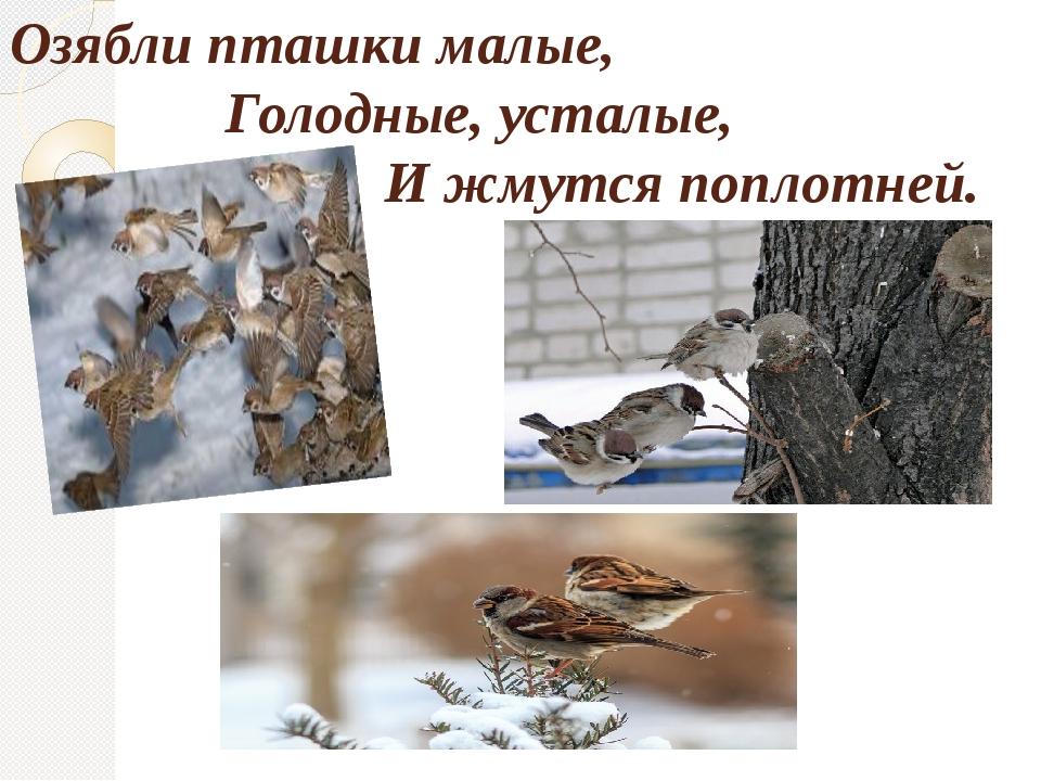 Озябли пташки малые, Голодные, усталые, И жмутся поплотней.
