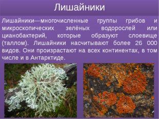 Лишайники Лишайники—многочисленные группы грибов и микроскопических зелёных в