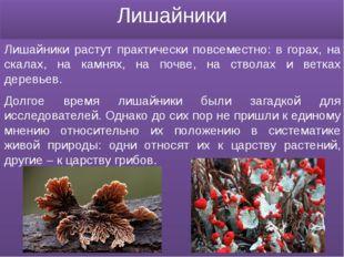 Лишайники Лишайники растут практически повсеместно: в горах, на скалах, на ка