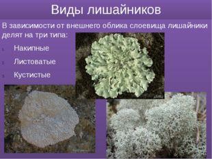 Виды лишайников В зависимости от внешнего облика слоевища лишайники делят на