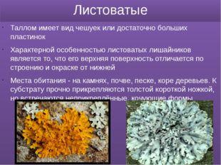 Листоватые Таллом имеет вид чешуек или достаточно больших пластинок Характерн