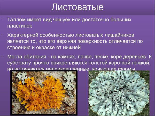 Листоватые Таллом имеет вид чешуек или достаточно больших пластинок Характерн...