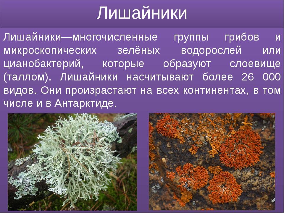Лишайники Лишайники—многочисленные группы грибов и микроскопических зелёных в...