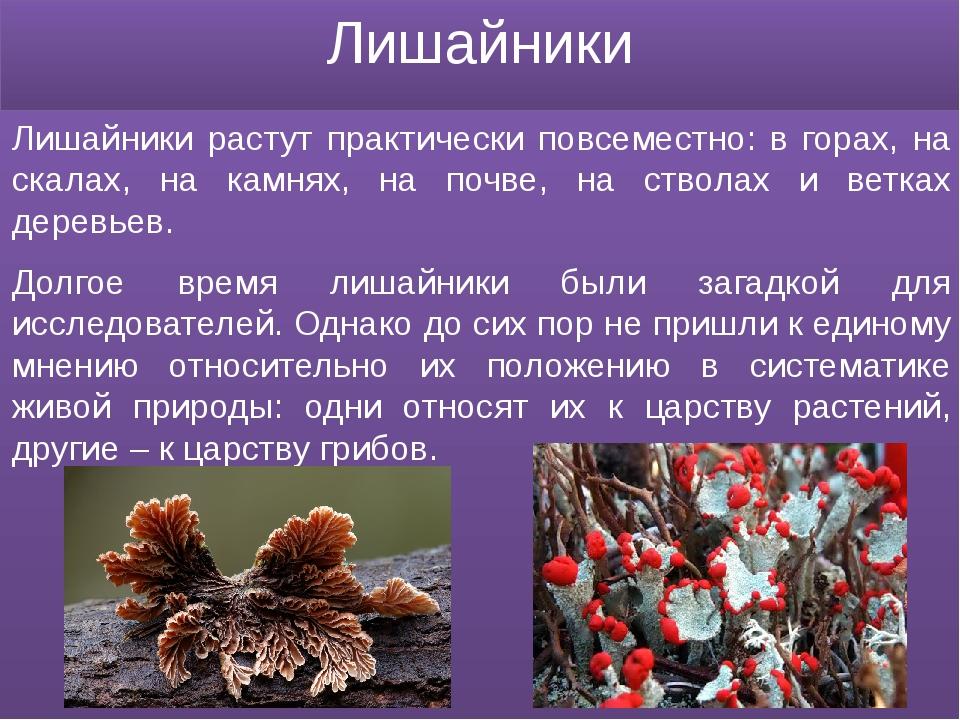 Лишайники Лишайники растут практически повсеместно: в горах, на скалах, на ка...