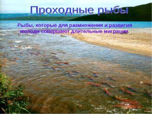 Рыбы, которые для размножения и развития молоди совершают длительные миграции.