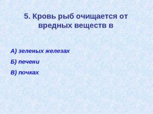 5. Кровь рыб очищается от вредных веществ в А) зеленых железах Б) печени В) п