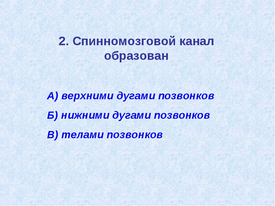 2. Спинномозговой канал образован А) верхними дугами позвонков Б) нижними дуг...