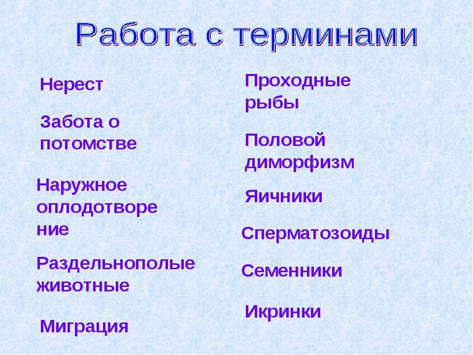 Нерест Забота о потомстве Наружное оплодотворение Раздельнополые животные Миг...