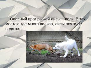 Опасный враг рыжей лисы – волк. В тех местах, где много волков, лисы почти н