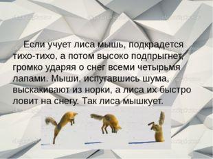 Если учует лиса мышь, подкрадется тихо-тихо, а потом высоко подпрыгнет, гром