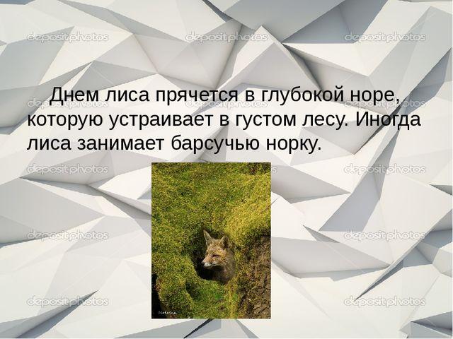 Днем лиса прячется в глубокой норе, которую устраивает в густом лесу. Иногда...