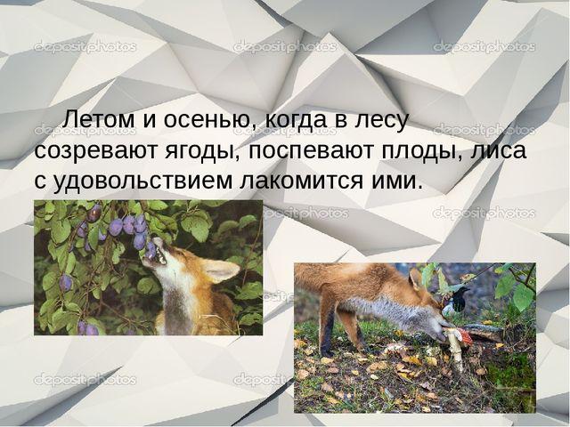 Летом и осенью, когда в лесу созревают ягоды, поспевают плоды, лиса с удовол...