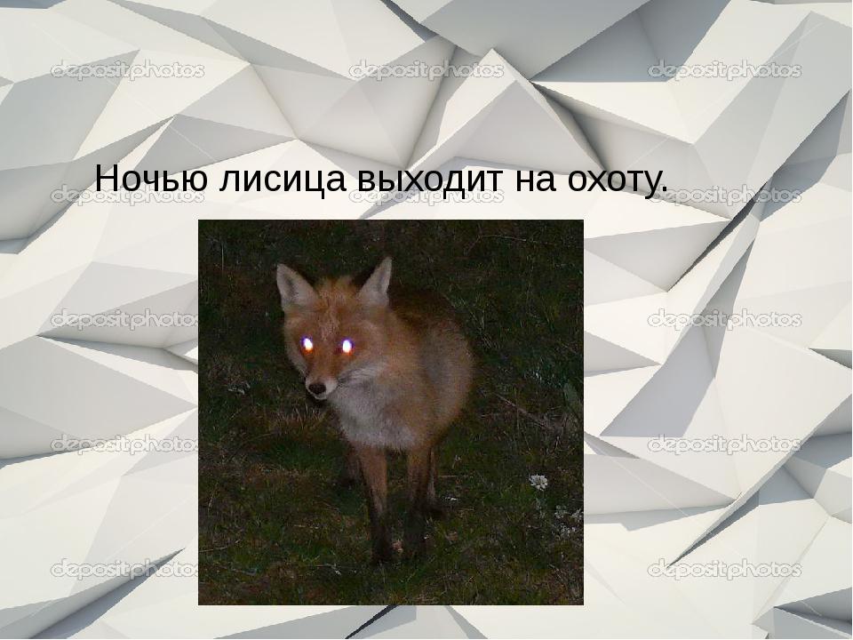 Ночью лисица выходит на охоту.