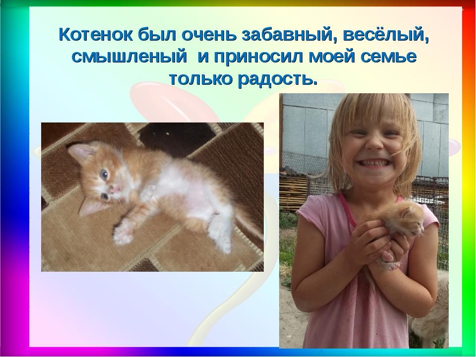Котенок был очень забавный, весёлый, смышленый и приносил моей семье только р...