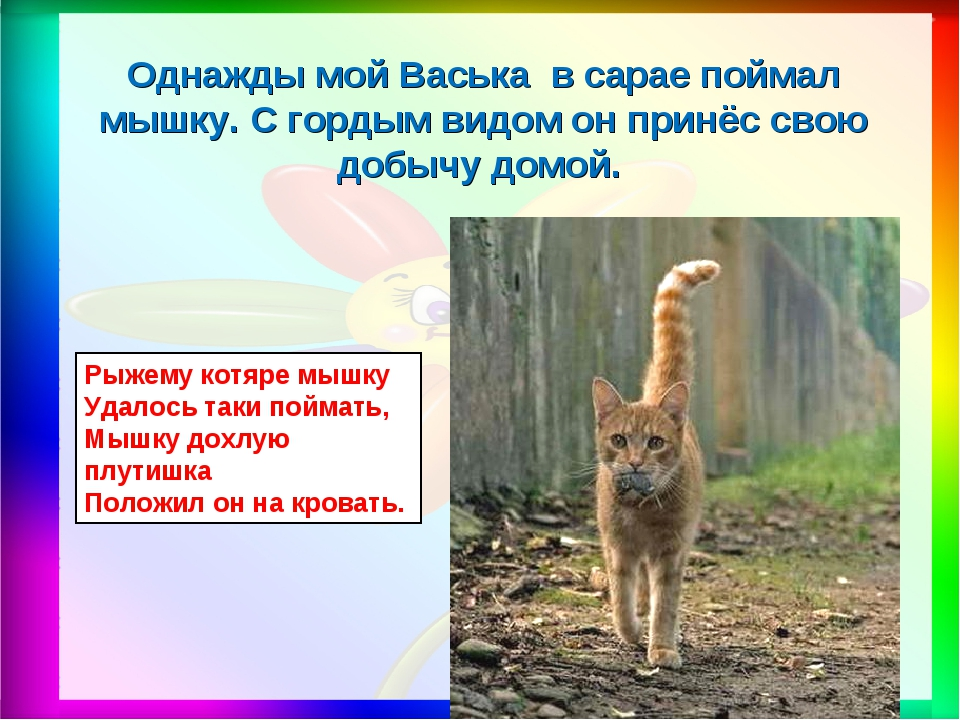 Рыжему котяре мышку Удалось таки поймать, Мышку дохлую плутишка Положил он на...