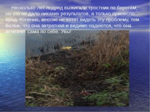 Несколько лет подряд выжигали тростник по берегам, но это не дало никаких рез