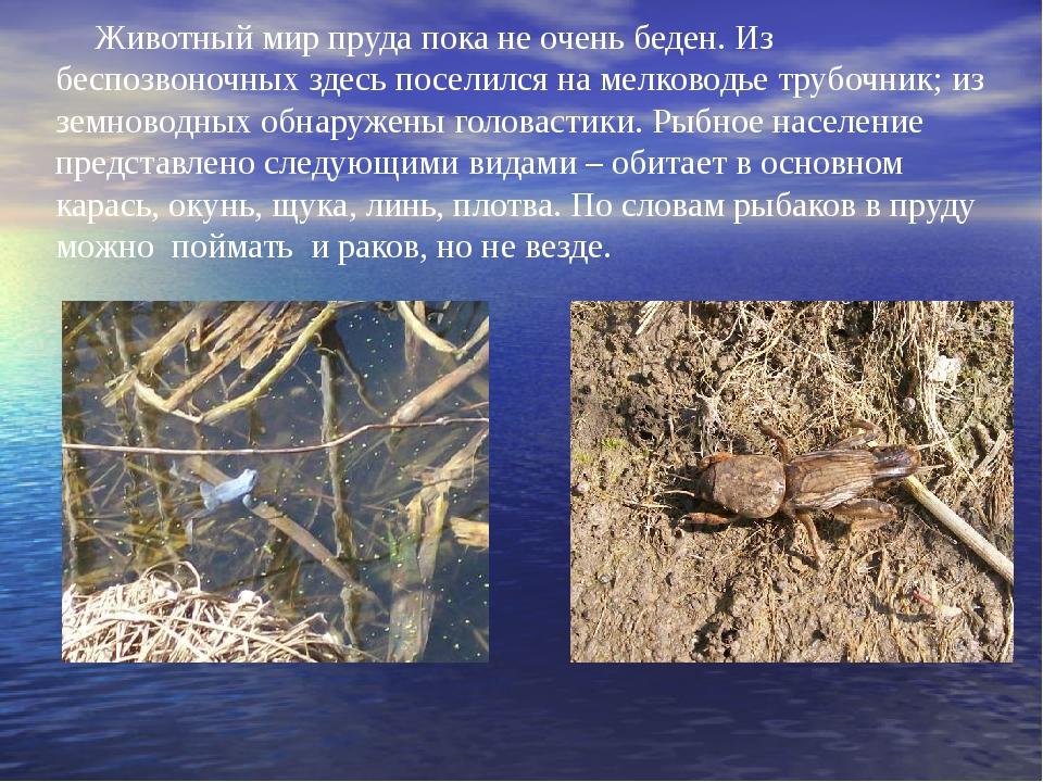 Животный мир пруда пока не очень беден. Из беспозвоночных здесь поселился на...