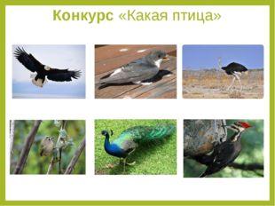 Конкурс «Какая птица»