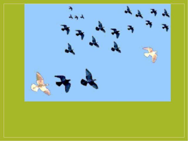 Перелётные птицы.