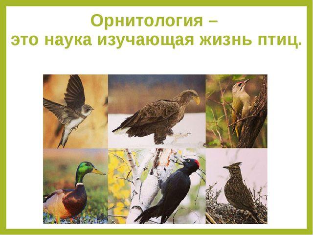 Орнитология –  это наука изучающая жизнь птиц.